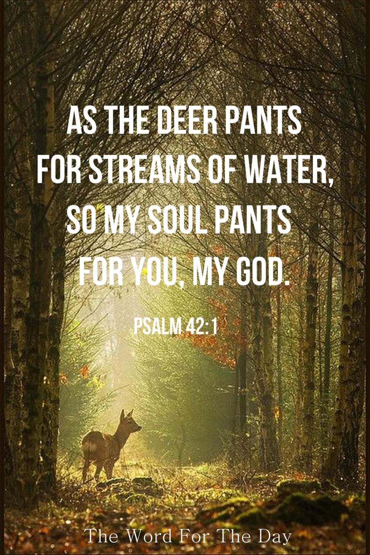 Deer pants.jpg